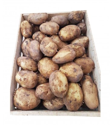 Картофель белый 1кг