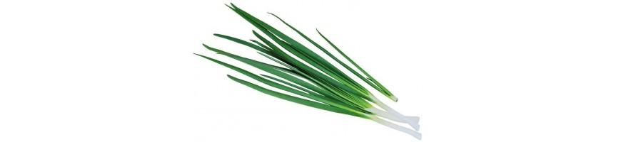 Зеленый лук купить c доставкой по всему Ташкенту