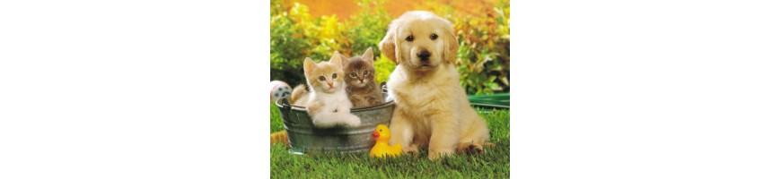 Для домашних животных купить c доставкой по всему Ташкенту