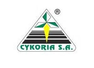 Cykoria